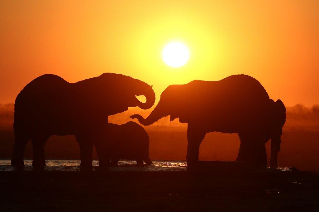 Sunset, Etosha, Nambia