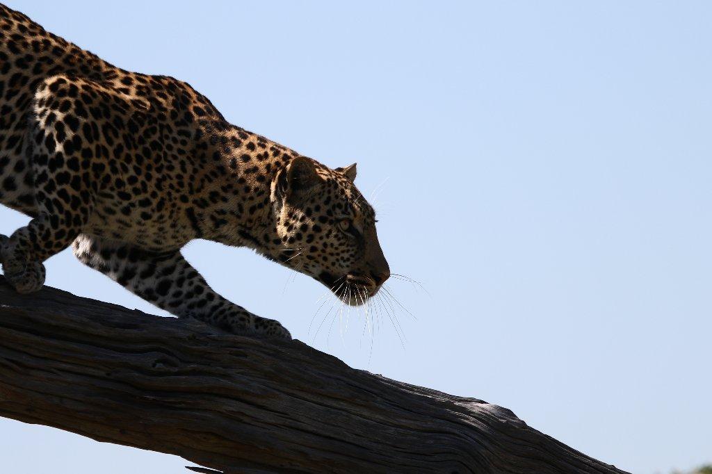 Moremi Game reserve, Botswana