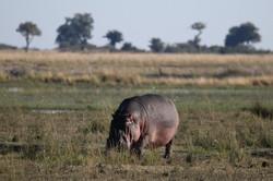 Chobe River Reserve, Botswana