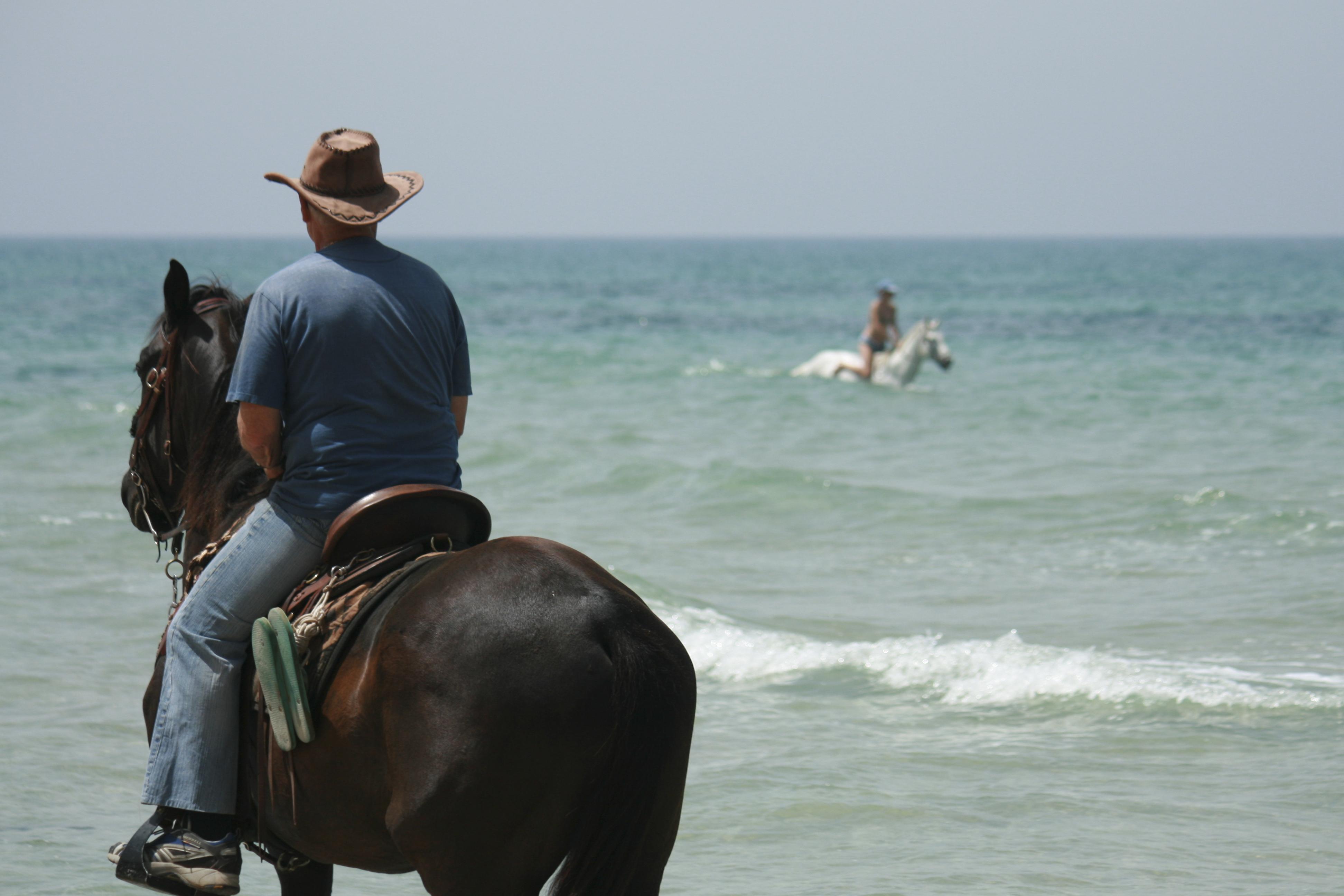 Horses, Ga'ash beach, Israel