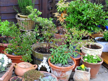 COVID-19 Encourages Gardening  to Increase