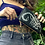 Thumbnail: Scorpion Clutch