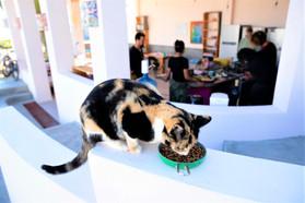pet friendly hostel
