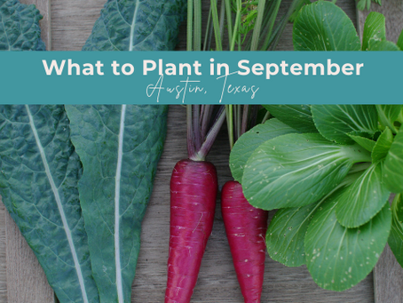 What to Grow in September in Austin, TX