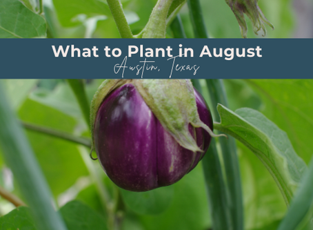 What to Grow in August in Austin, Texas