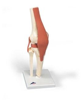 functional knee.jpg