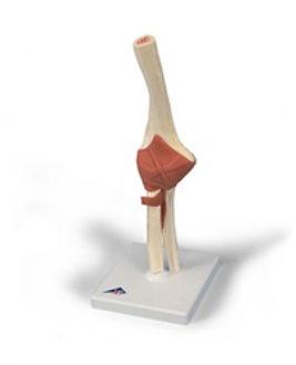 functional elbow.jpg