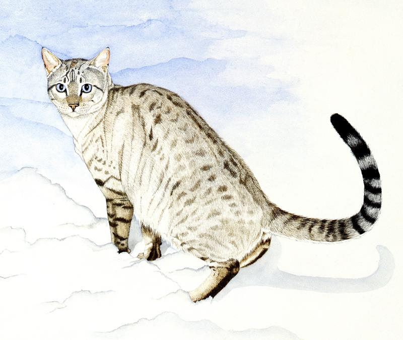 Snow Bengal