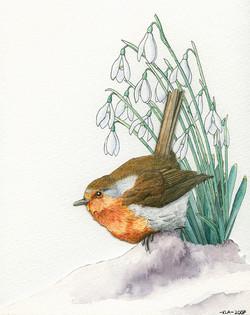 Robin and Snowdrops
