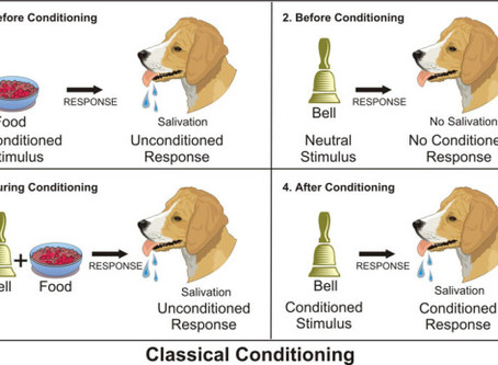 The science behind dog training