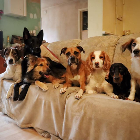 Life with 7 dogs