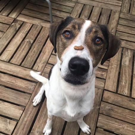 Should I use treats when training my dog?