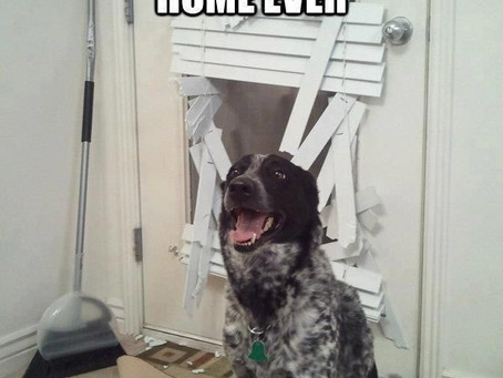 Tip's for helping dogs with separation anxiety