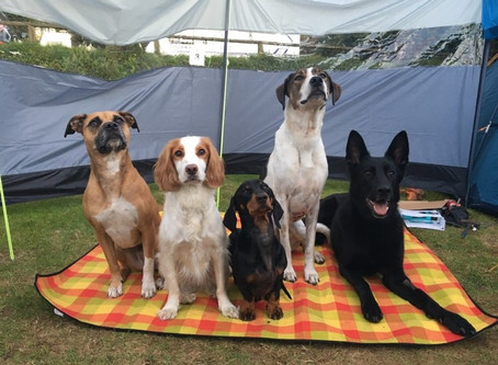 Camping trip with 5 dogs!