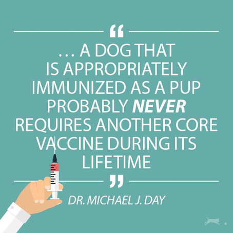 Vaccinations: deciding what's best for your dog