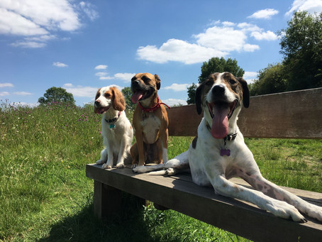 Why it's so important to meet your dog trainers dogs.