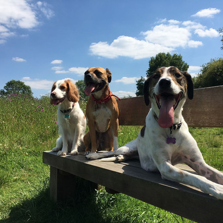 Why it's so important to meet your dog trainers dogs