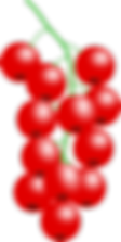cranberry canneberge cystite infection urinaire récidive
