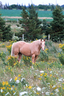 Canadian Pastures