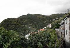 Ligurian Vineyards