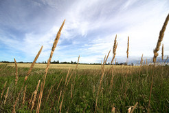 Forever Fields