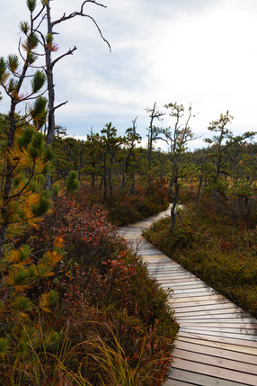 Meander ↟ Saco Heath Preserve