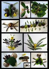 Nature Art insects.jpg