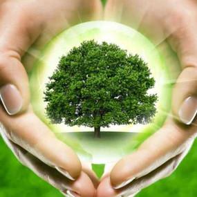 В Томске стартует конкурс по сбору макулатуры «Спаси дерево»