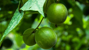 What's Monk Fruit and Why is Everyone Talking About It?