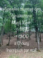 IMG_2700 2.jpg