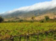 Das Tal von Tarija in Bolivien