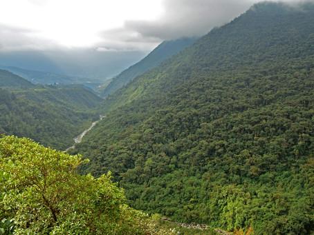 Incachaca im Carrasco Nationalpark