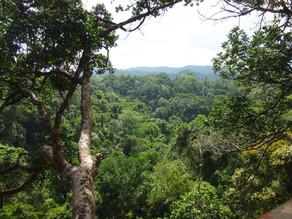 Une chambre avec vue sur la jungle