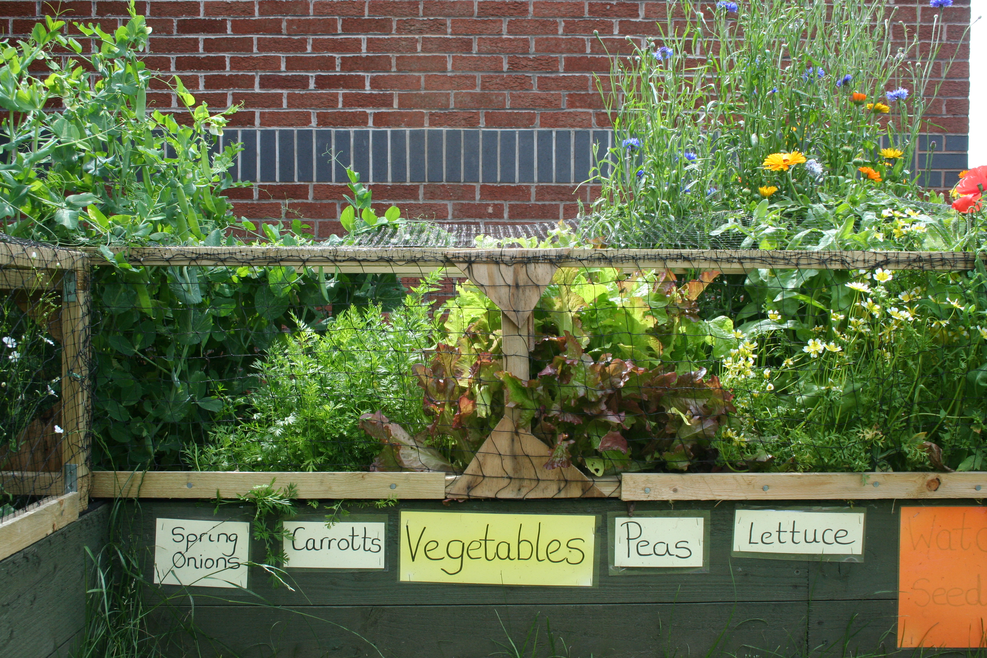 Vegetables grown by the children
