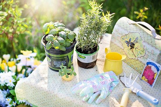 planting-780736_1280.jpg