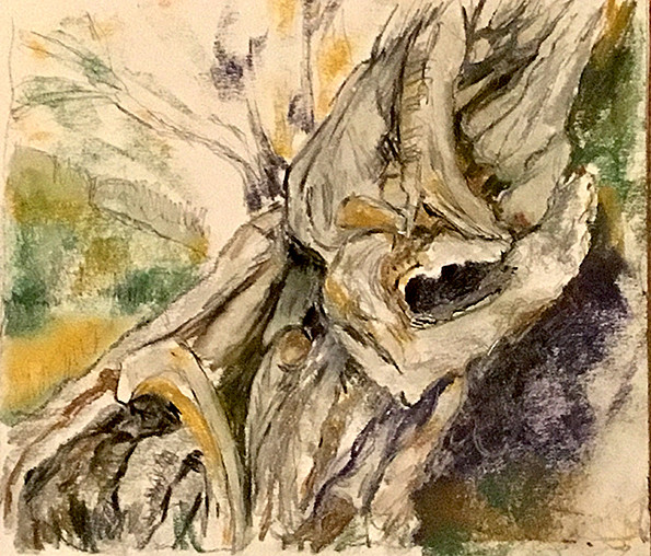 Chalk pastel sketch of the rough, twisted, highly textured limbs of an ancient olive tree. Yellow ochre, yellow, green, purple, grey.