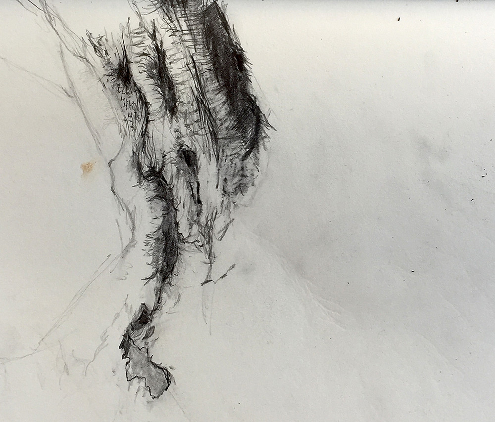 Black and white pencil drawing showing the hollows and textures of the trunk of an ancient olive tree. #pencildrawing #drawing #treetrunk #hollowtree