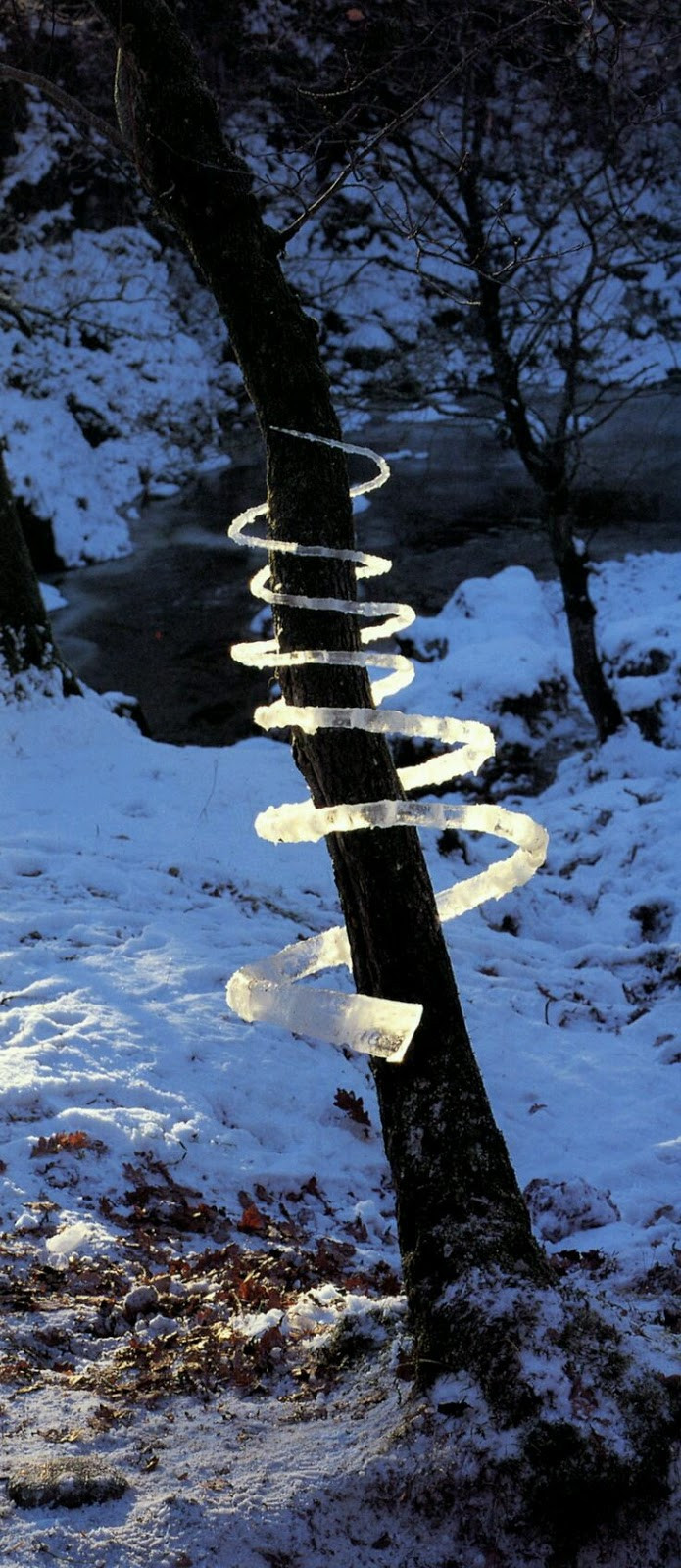 Light catches and illuminates a spiral of ice that the artist has spun around the trunk of a tree. Andy Goldsworthy, Ice. Tree. Blue. Black. White. Light.