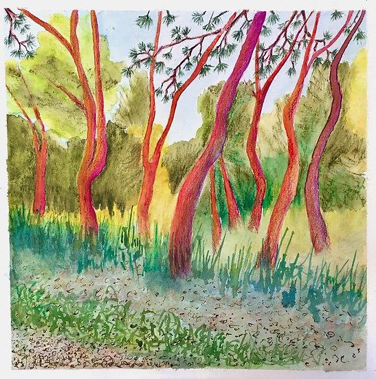 Dawn Pines