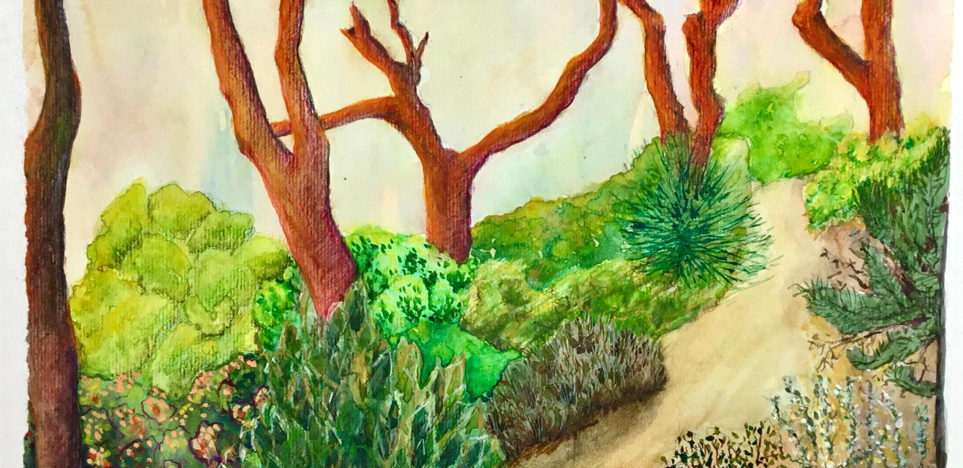 Sunset Pines.jpg
