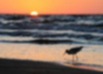 _bird_sunrise2_5220.jpg