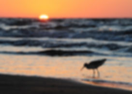 _bird_sunrise2_5220.jpg