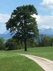 Kraftbaum von BD Wellness