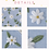 Thumbnail: Daisies PDF Hand Embroidery Pattern