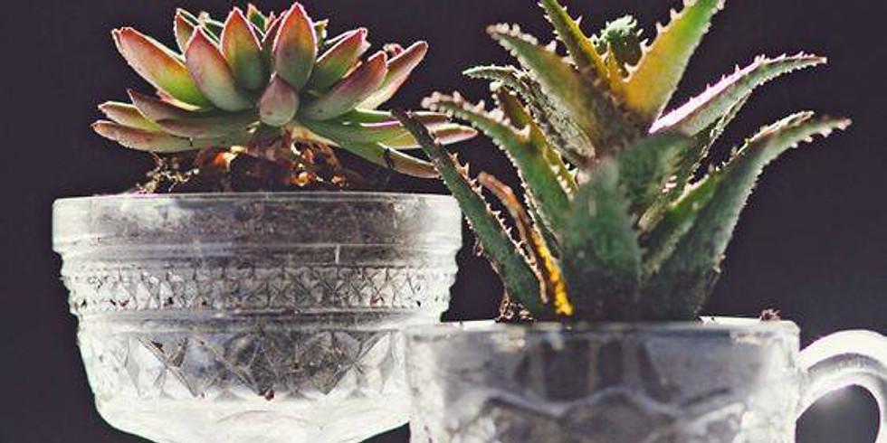 Antique Cut Glass Succulent // Make + Take