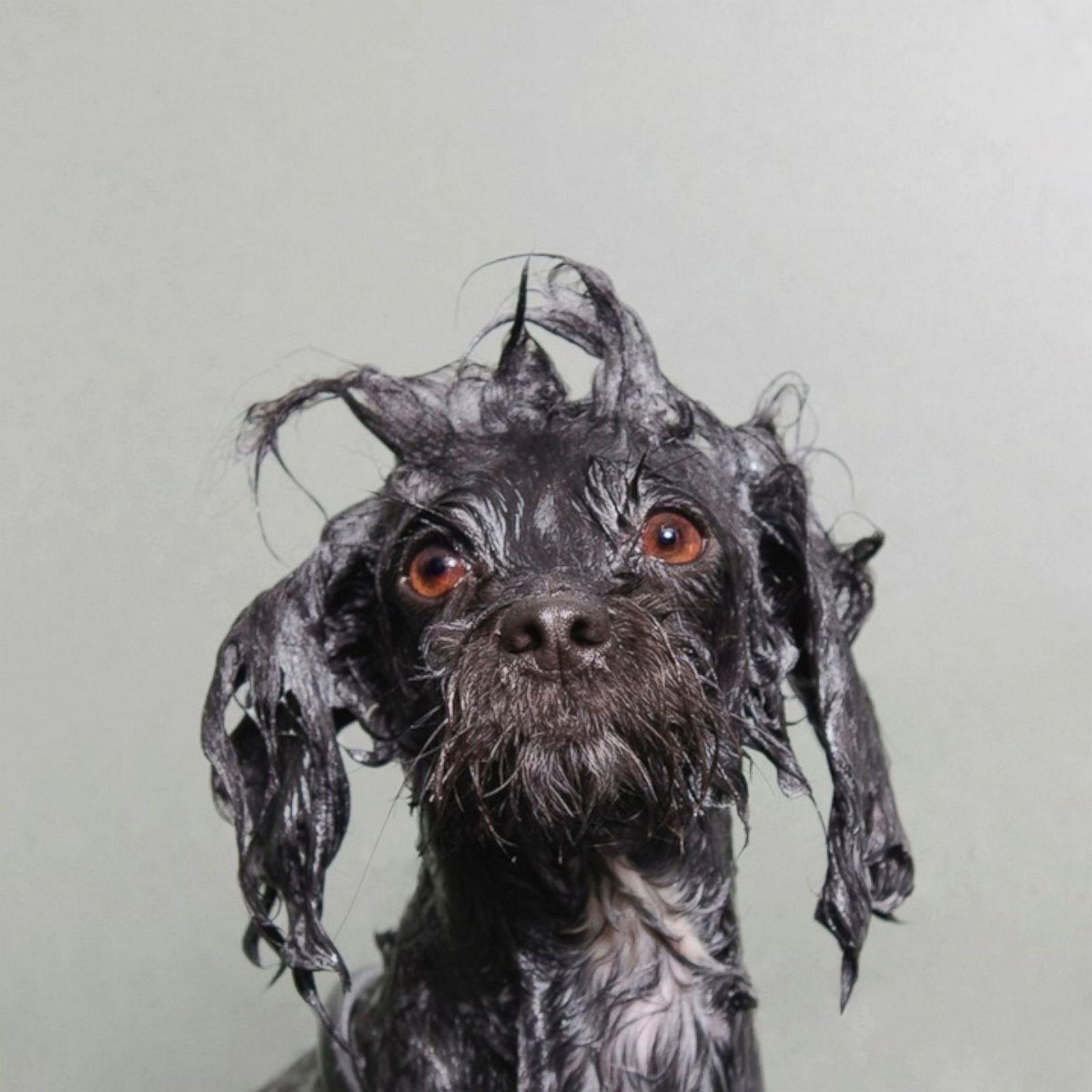 HT_wet_dog1_ml_131126_1x1_1600