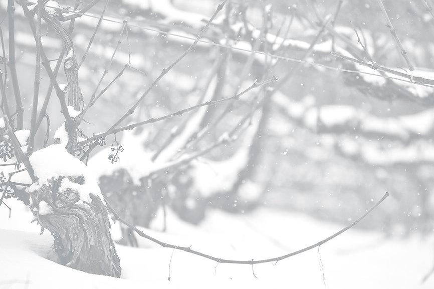 photo fond blancs copie.jpg