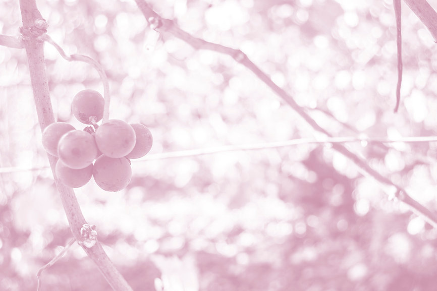 photo_fond_ROSÉ.jpg