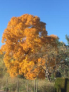 Autumn Tree Copyright 2020 Adam Wiggins