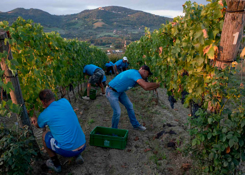 We were part of the winery team during the harvest of our client Tenuta Mara
